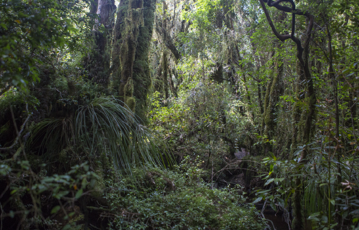 Temperate rainforest, Senda Darwin