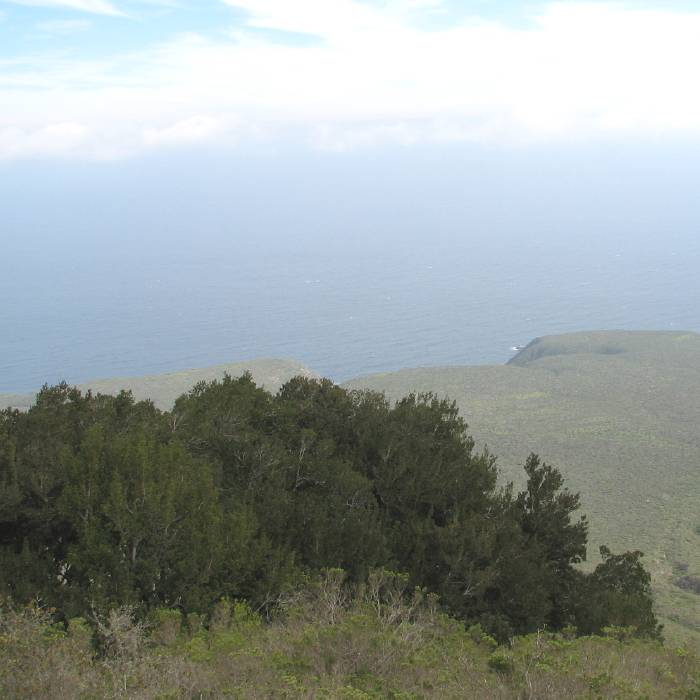 Fray Jorge, view over the Pacific Ocean