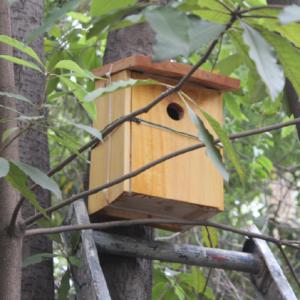 Installation of a nest box at Carmela Carvajal School