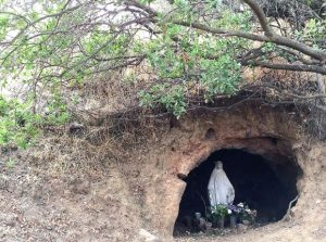 Virgen en bosque de Chile central   Foto: Meredith Root- Bernstein